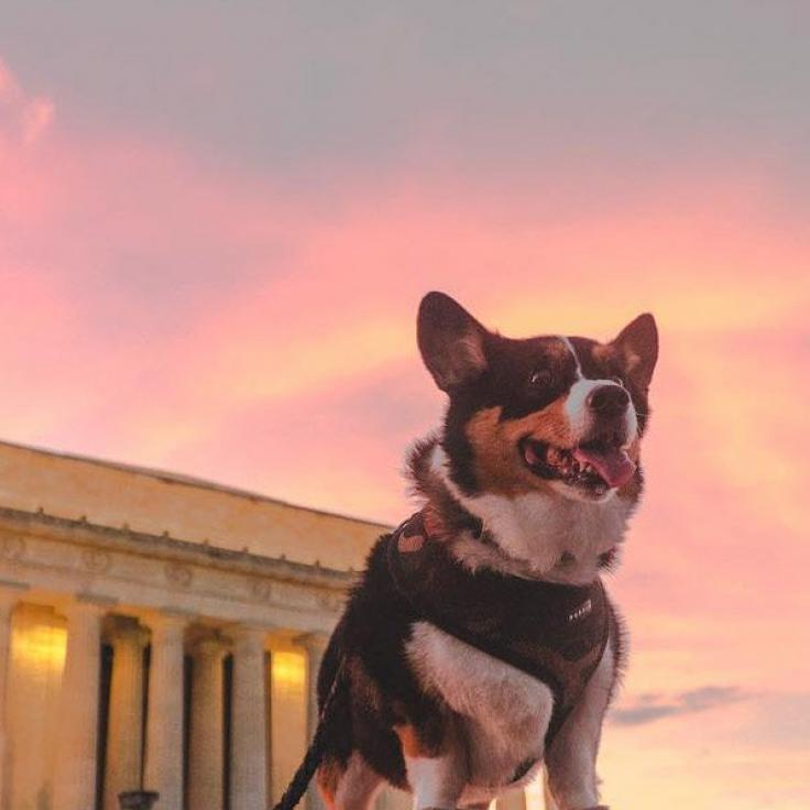 @_chriscruz - Corgi by the Lincoln Memorial at sunset - National Mall in Washington, DC