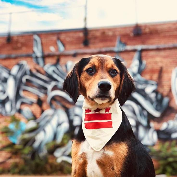 @notorious_chico - Dog in front of street murals in Washington, DC's NoMa neighborhood