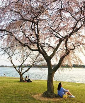 @mollymooooo - Springtime scene along the Potomac River - Things to do in Washington, DC
