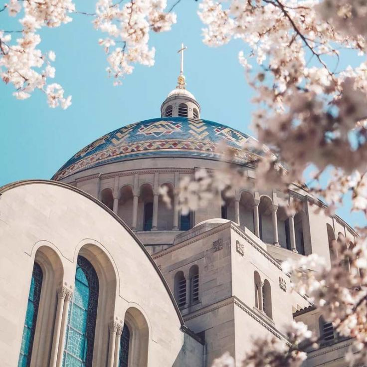 @mattschmalzel - Spring cherry blossoms at the Basilica of the National Shrine of the Immaculate Conception - Things to do in Washington, DC