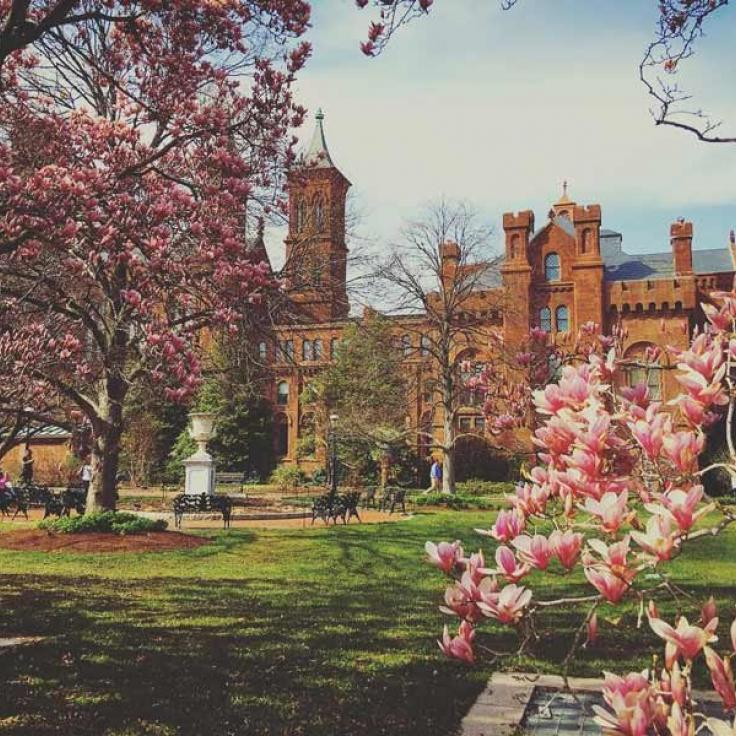@pinkie925 - Spring flowers in front of the Smithsonian Castle on the National Mall in Washington, DC