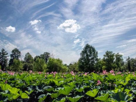 @canon_cl - Summer day at Kenilworth Aquatic Gardens - Free park in Washington, DC